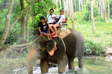 ขี่ช้างชมธรรมชาติ